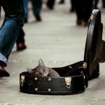 アコースティックギターの弦などアコギ初心者が必要なおすすめは?